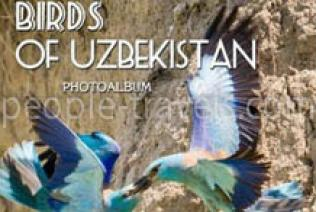 """Birds of Uzbekistan"" photo album was released as a big present for ornithologist-tourists"