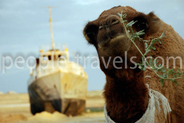 Aral Sea Photos - Uzbekistan Photo Gallery