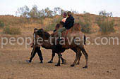 Photo reports about Camel tour in Uzbekistan