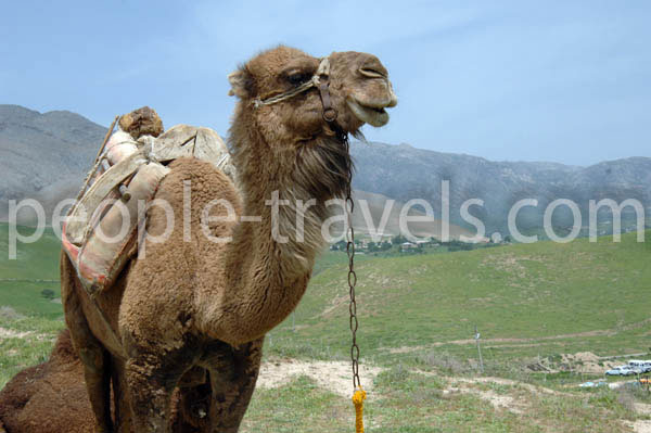 Camel Trip Photos - Uzbekistan Photo Gallery