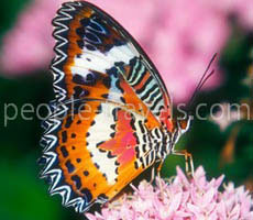 Feel the beauty and fascination. The butterfly show-exhibition