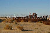 Aral Bilder - Foto-Galerie von Usbekistan