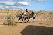 Reportaje de foto del viaje en camello en Uzbekistán