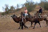 Fotos de Safari por camello en Uzbekistán